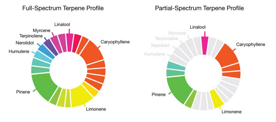 terpene post_full v partial spectra